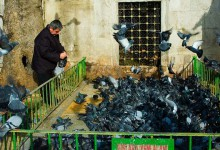 Fågelinfluensa sprider oro i Turkiet